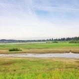 Visit The Tualatin River National Wildlife Refuge